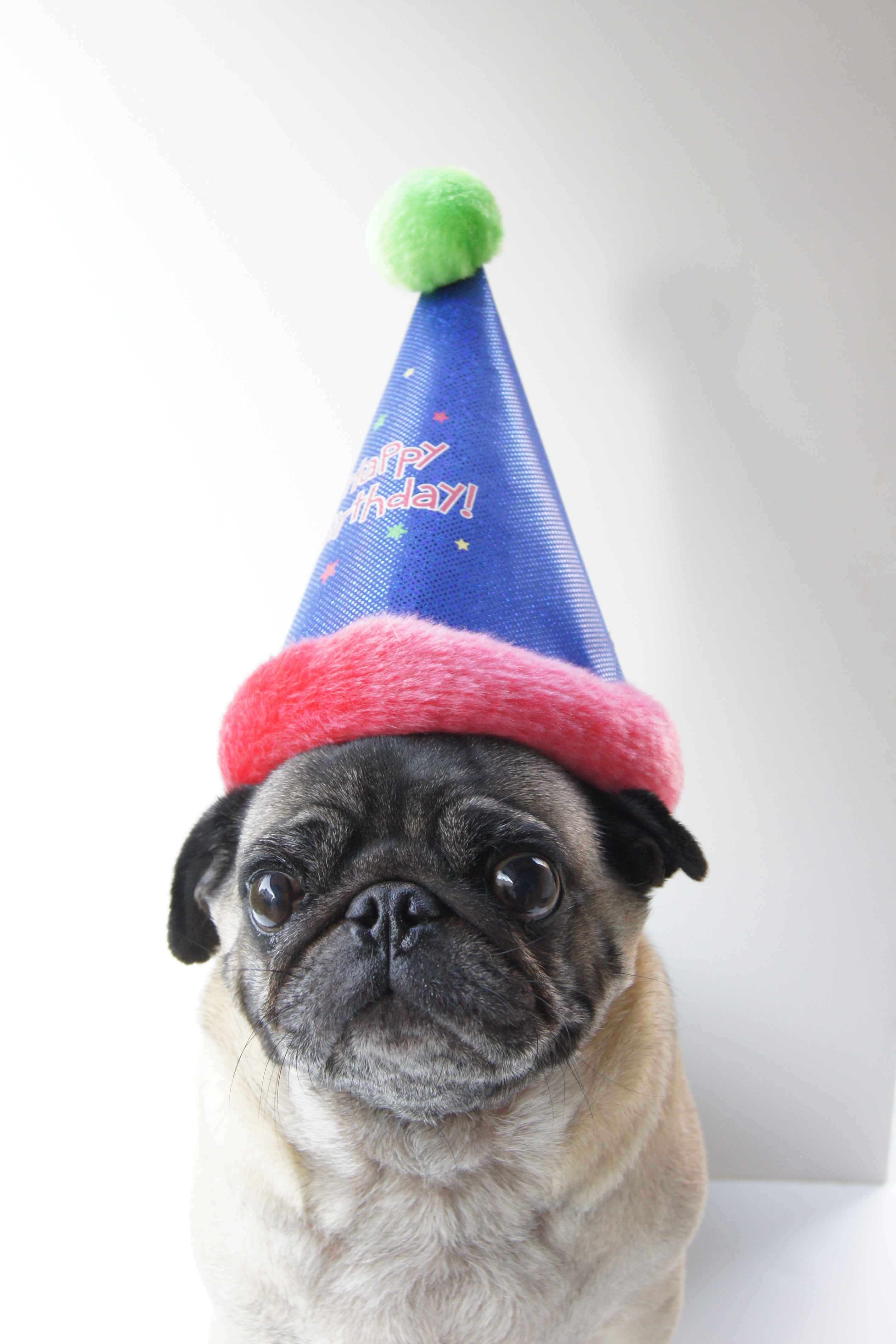 Funny Happy Birthday Pug